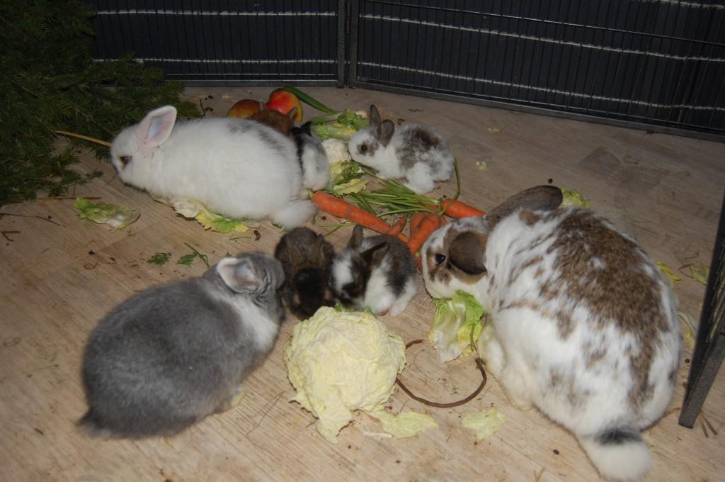21 tage alte kaninchen
