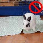 Die Top 10 Gefahrenquellen für Kaninchen