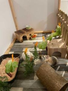 Kaninchen fressen am Futterseil