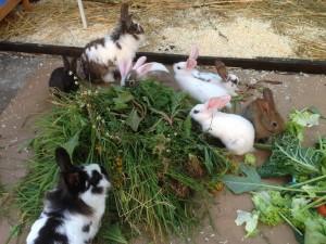 Kaninchen-aufzucht