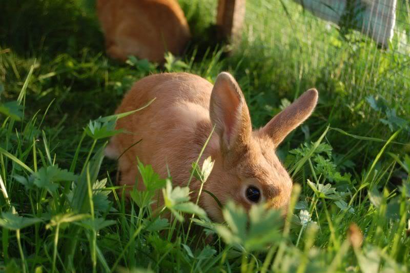 Giftige pflanzen für kaninchen