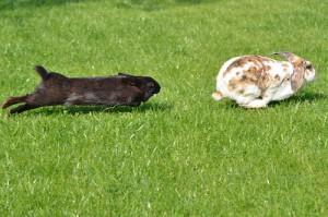 Kaninchen-unvertraeglich