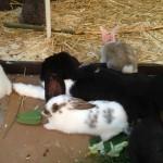 Kaninchenbabys gruppe
