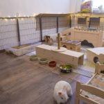 Kaninchenzimmer