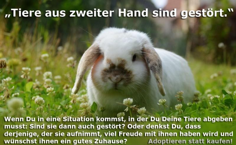Tierheim-Kaninchen-Vorurteile-Kopie_1