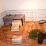 Wohnungs-Kaninchengehege2
