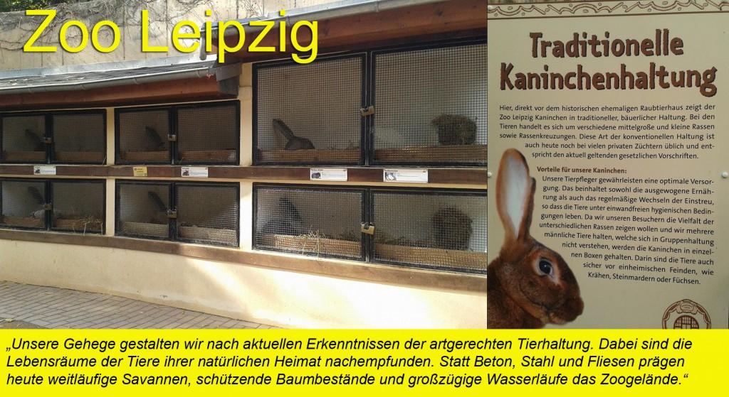 Zoo Leipzig Kaninchen