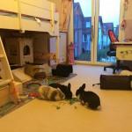 Kaninchen im Schlaf- und Kinderzimmer?