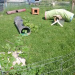 abenteuerspielplatz auslauf kaninchen