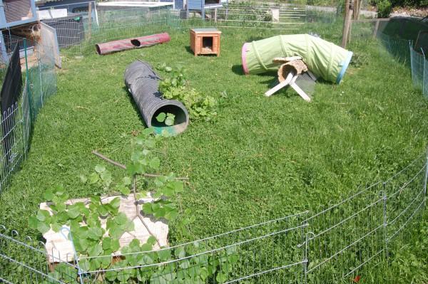 abenteuerspielplatz auslauf kaninchen kaninchenwiese. Black Bedroom Furniture Sets. Home Design Ideas