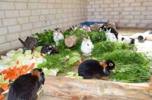 ad libitum kaninchen