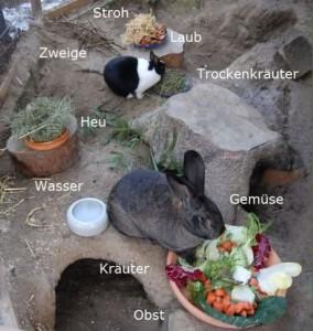 ad libitum winter kaninchen