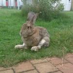 arthrose-kaninchen