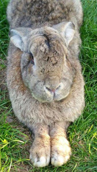 Arthrose, Spondylose, HD (Hüftdysplasie) beim Kaninchen