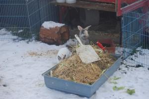 ausmisten kaninchen