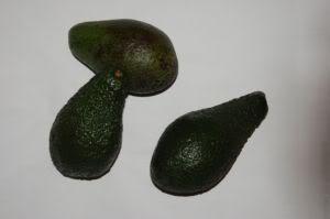 avocado-kaninchen