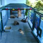 balkongehege