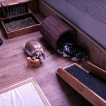 balkonien kaninchen