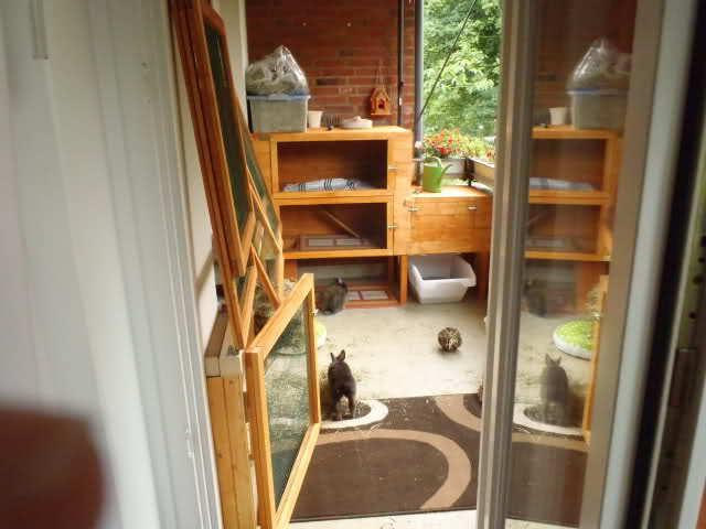Balkonhaltung - Kaninchenstall einrichten ...