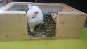 behindertengerechte kaninchentoilette