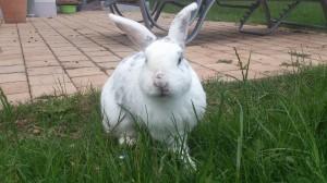bissverletzung-nase-kaninchen-gewebekleber