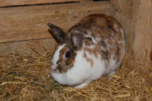blähungen-kaninchen