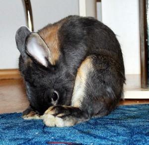 blinddarmkot-aufnahme-kaninchen