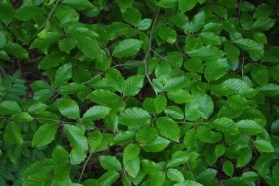 durchfall schwarz grün