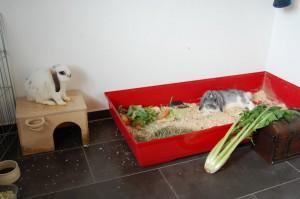 chaplin-kaninchen