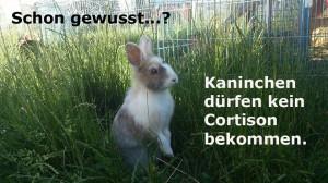 cortison kaninchen