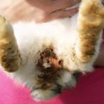 Enterocolitis beim Kaninchen