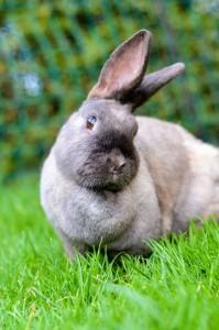 ec kaninchen