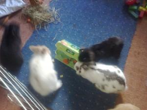 eierkarton-kaninchen-spielzeug