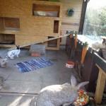 einrichtung kaninchen