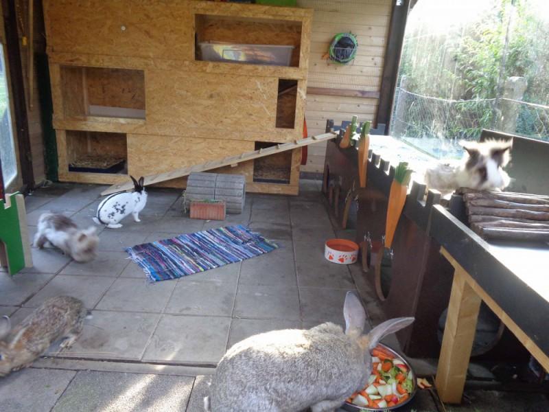 einrichtung kaninchen kaninchen ratgeber. Black Bedroom Furniture Sets. Home Design Ideas