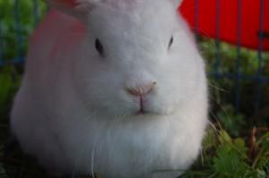 erkältung kaninchen