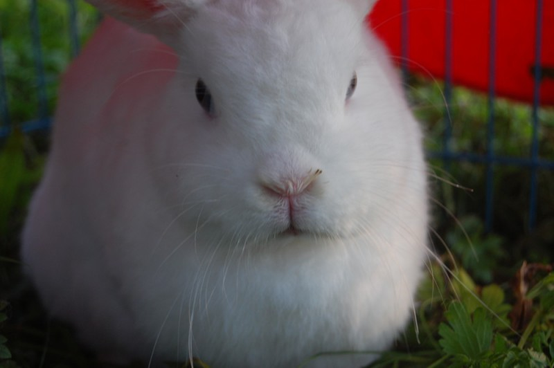 mittel gegen kaninchen so werden sie wildkaninchen los