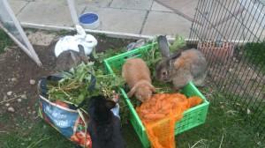 Kaninchen-Sackfutter-Vergleich