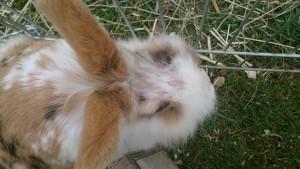 fell weg geputzt kaninchen