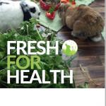 flyer kalziumarme ernährung kaninchen