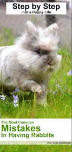 flyer rabbits english
