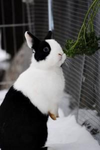 frische-küchenkräuter-kaninchen