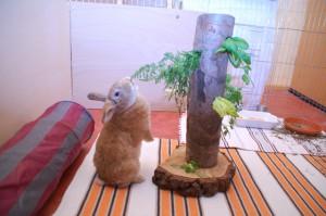 futterturm-kaninchen