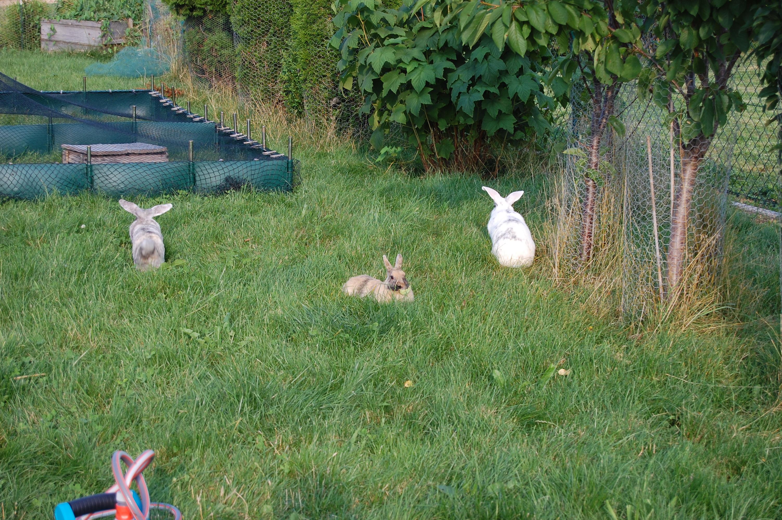 kaninchenbau im garten