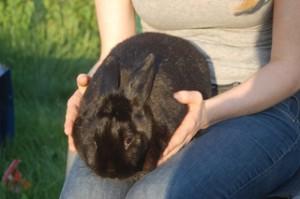 geducktes-kaninchen