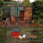 gehege kaninchen zwerghasen