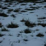 gras winter kaninchen