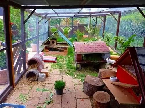 Für kaninchen pflanzen ungiftige 29 ungiftige
