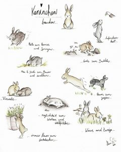 grundbedürfnisse kaninchen