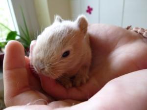 handaufzucht-kaninchen